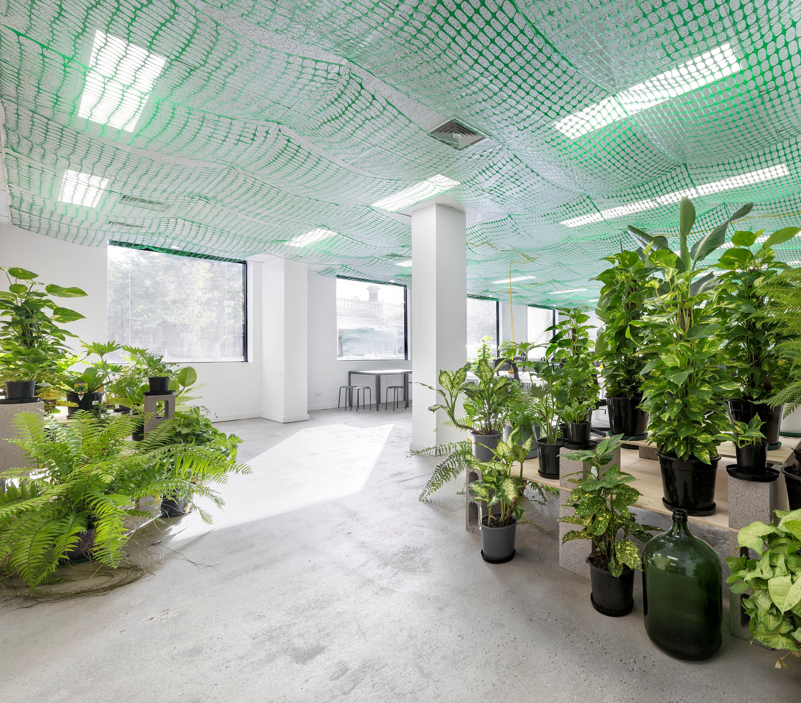 Co-work in a naturally-lit, plant-filled office environment, image 1