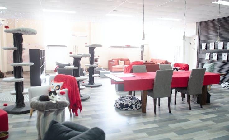 The Cat Lounge, multi-use area at Neko HQ, image 1