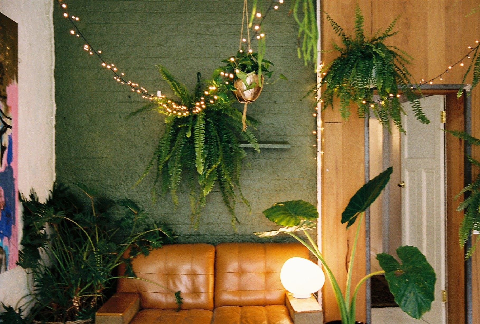Collingwood Plant Studio, multi-use area at Jenna Holmes, image 3