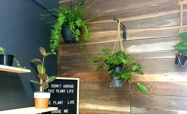 Crazy Plant Life Gallery Room, shop share at Pop up events at Crazy Plant Life, image 1